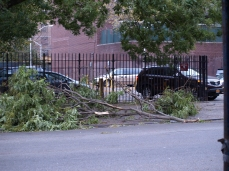 A fallen branch outside a parking lot on East 12th Street. (Photo by Maria Rocha-Buschel.)