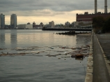Debris floated in the East River on the Wednesday after the storm. (Photo by Maria Rocha-Buschel.)