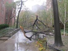 Another one of the tree casualties in Stuyvesant Town. (Photo by Ingrid Devita.)
