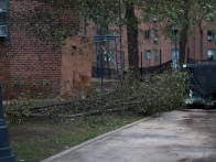 Peter Cooper Village sustained heavy damage at the corner of East 23rd and Avenue C, with a number of toppled trees and stray branches. (Photo by Maria Rocha-Buschel.)