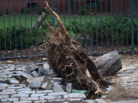 A tree on East 23rd Street at Avenue C was pulled up by its roots. (Photo by Maria Rocha-Buschel.)