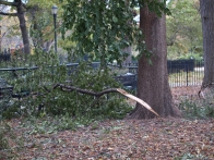 Damage to trees could be seen from the outside of Tompkins Square Park. (Photo by Maria Rocha-Buschel.)