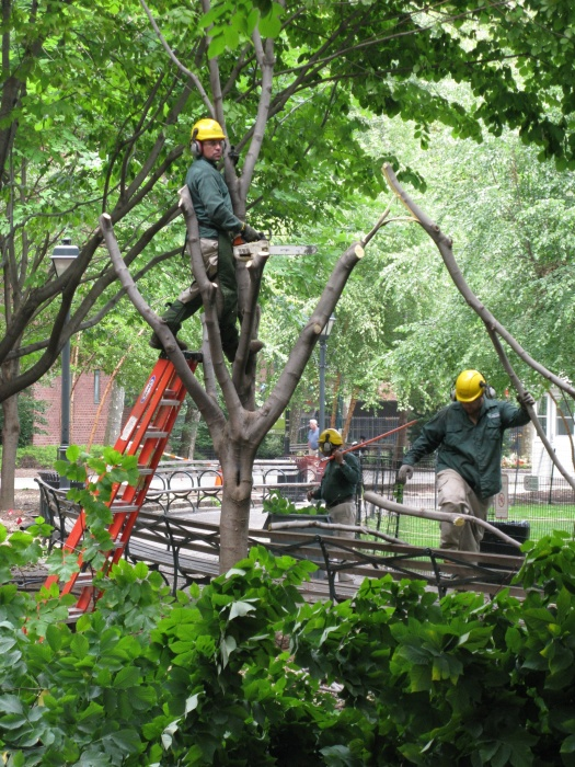 Workers remove trees from the Oval on Tuesday.