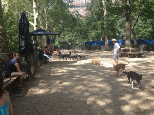 The dog run at Madison Square Park on a recent afternoon (Photo by Maria Rocha-Buschel)
