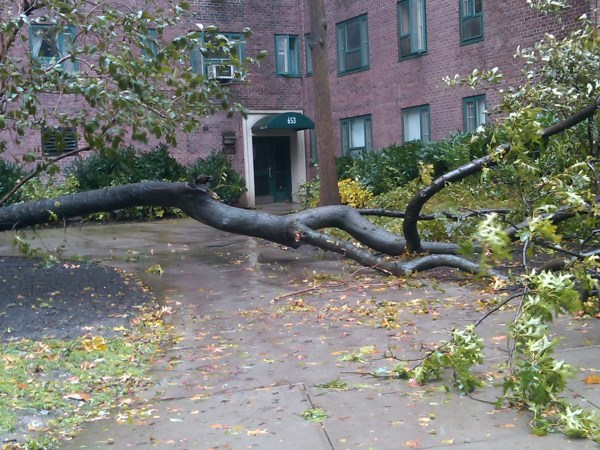 Downed tree in Stuyvesant Town (Photo by Marilyn Pascarelli)