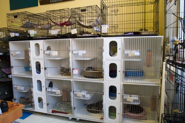 Some of the City Critters cats available for adoption at Petco (Photo by Lori Grunin)