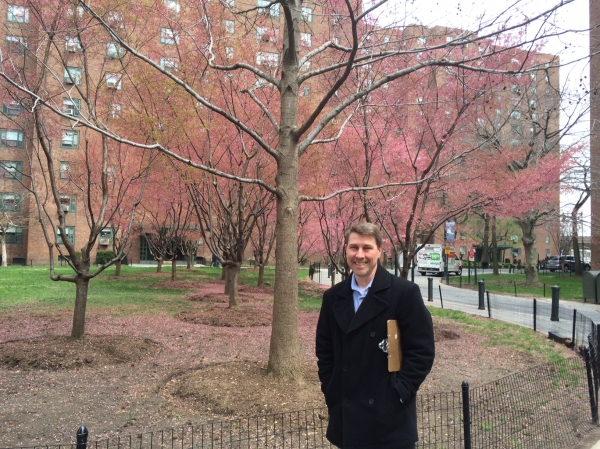 Chuck Hartsell, director of horticulture and landscape for ST/PCV, standing by the cherry trees in Peter Cooper Village, said more sustainability and visibility are the goals of ongoing landscaping work. (Photos by Sabina Mollot)