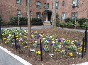 A recently planted area in Stuyvesant Town