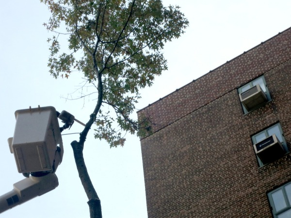 A tree near 440 East 20th Street was cut down.