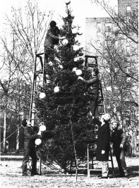 Recreation staffers decorate a tree on the Oval in 1978. (T&V archives)