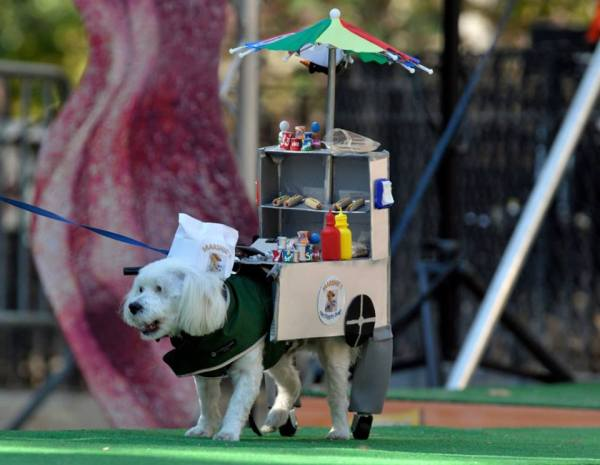 Oct15 Dog Parade 2014