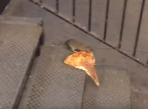 Regulars at the First Avenue L station can say they knew #Pizzarat before his internet fame.