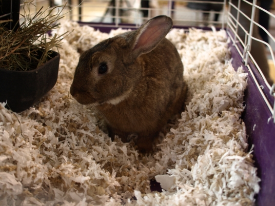 One of the bunnies at an adoption event held at the former Police Academy building (Photos by Maria Rocha-Buschel)