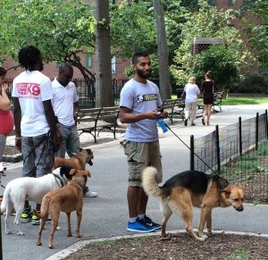Dog walkers bring their charges out for a stroll in Stuyvesant Town, in this photo taken in August of 2014. (Photo by Sabina Mollot)