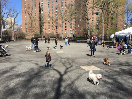 "Fido got to frolic freely on Saturday and additional ""dog days"" are planned at Stuyvesant Town's Playground 1 in response to requests for a dog run as well as the requests to keep the complex-dog park-free. (Photo by Sabina Mollot)"