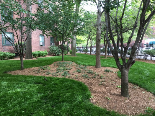 The addition of more mulched areas as well as fences in ST/PCV is aimed at protecting the grass from dog waste.  This is part of an ongoing landscape renovation. (Photo by Sabina Mollot)