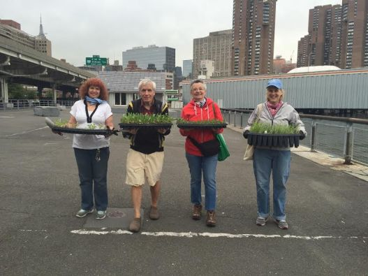 Regular park angel volunteers: Orlinda Calmeid, Tom Eccardt, Maria Pia Belloni and Barbara Bienenfeld (Photo by Liza Mindemann)
