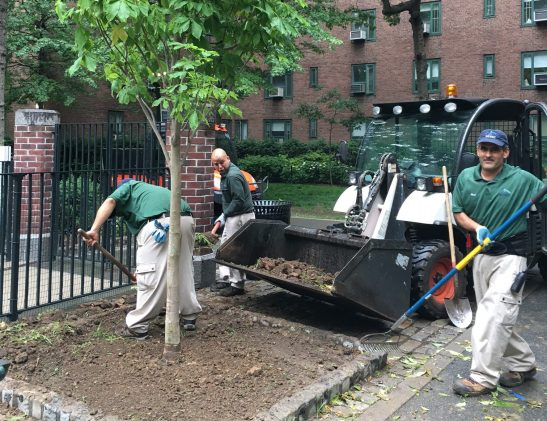Workers plant a tree on Friday morning in Stuyvesant Town, as part of a project to bring one tree to the property per day in June. (Photo by Sabina Mollot)