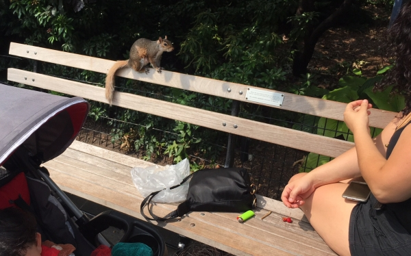 Aug30 squirrel on bench